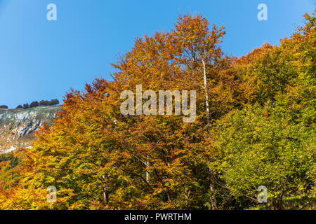 Trees in the fall - Stock Photo
