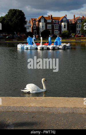Pedalos in the shape of swans, Canoe Lake, Southsea, Porstmouth, Hampshire, England, partly covered as out of season - Stock Photo