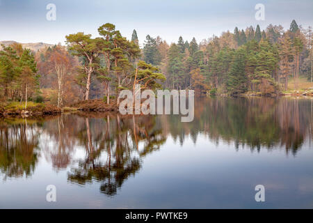 Autumn tree reflections at Tarn Hows in the Lake District, Cumbria, England - Stock Photo