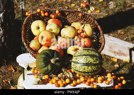 organic apples and pumpkins in basket autumn themed rustic outdoor still life - Stock Photo