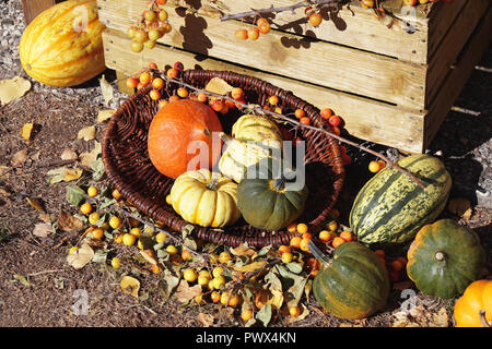 variety of pumpkins in basket autumn themed rustic outdoor still life - Stock Photo