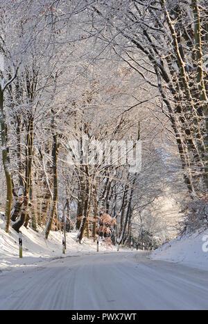verchneite Strasse mit Bäumen - Stock Photo