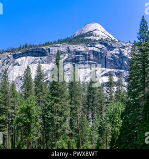 White mountain and towering trees in Yosemite CA - Stock Photo