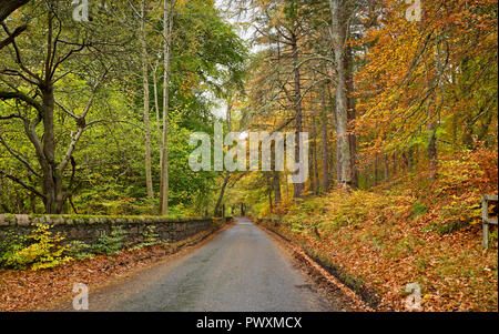 Beautiful autumn colours on Rothiemurchus Estate, tree-lined country lane near Inverdruie, by Aviemore, Cairngorms National Park, Scottish Highlands. - Stock Photo