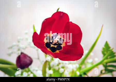 Tulip. Beautiful bouquet of tulips. colorful tulips. tulips in spring,colourful tulip. Beautiful red blooming Tulip in a composite bouquet. - Stock Photo