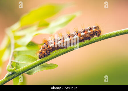 Horizontal photo with colorful caterpillar. Bug is perched on green stem and few leaves are visible on background. Color of insect is white, black and - Stock Photo