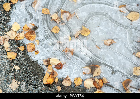 Frozen puddle with fallen autumn leaves - Stock Photo
