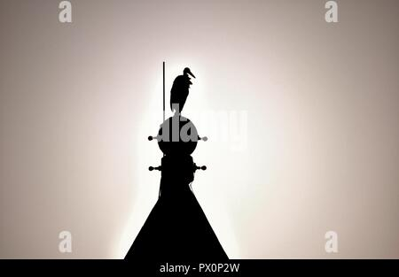 Silhouette of White Stork, Ciconia ciconia, migrating over the Maltese Islands. Bird is resting balancing on bell tower of Catholic Church, Malta - Stock Photo