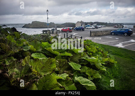 Ballintoy Harbour and Village are located alongside the B15 coast road, 17 miles north-east of Coleraine and five miles west of Ballycastle, Northetn