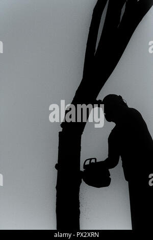 Portrait and Silhouette of an Arborist cutting down tree with a chainsaw - Stock Photo