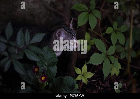cat playing in green grass in spring in the garden - Stock Photo