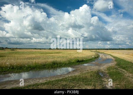 Puddles after rain on a dirt road, fields of grain and clouds in the sky - Stock Photo