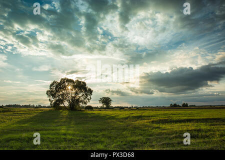 The setting sun behind a tree on a green meadow and dark rainy clouds in the sky - Stock Photo
