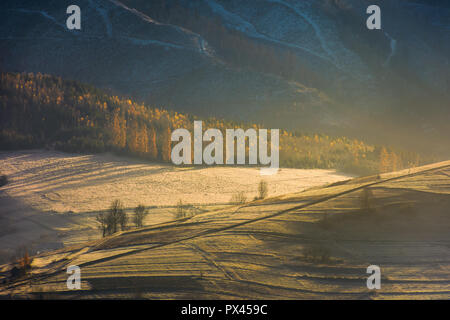 lovely autumn scenery in mountains. forest on hill in golden light and haze. beautiful nature background - Stock Photo