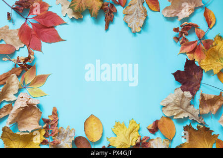 Fallen colorful leaves and copy space on punchy blue. Top view. Autumn frame. - Stock Photo