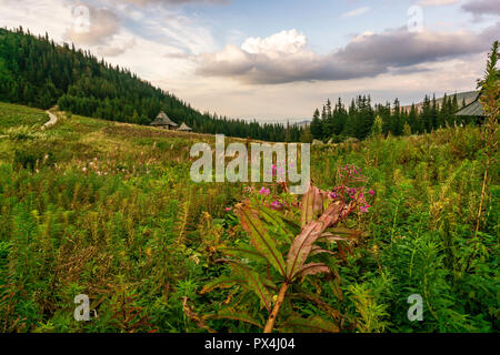 Gasienicowa valley. Tatra Mountains. Poland. - Stock Photo