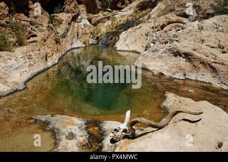 Kuduschädel vor natürlichem Wasserbecken, Naukluft Fluss, Waterkloof Trail, Naukluft Gebirge, Namib-Naukluft Park, Republik Namibia, Afrika - Stock Photo