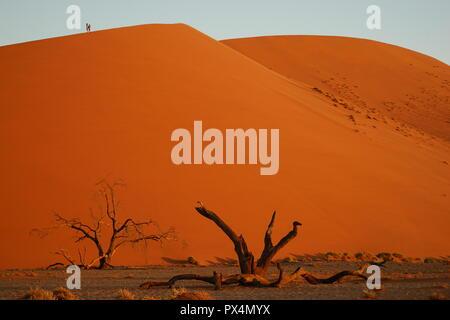 abgestorbener Kameldorn vor Düne 45, Namib-Dünenmeer, Namib Wüste, Sossusvlei-Gebiet, Namibia, Afrika - Stock Photo