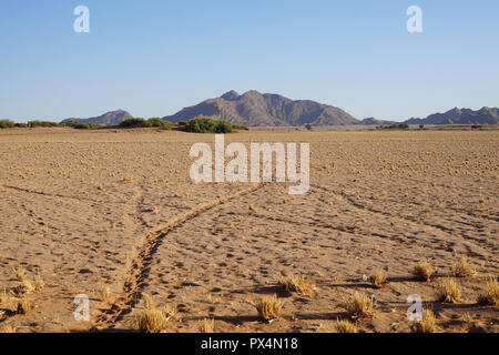 Seriem, Tierspuren in der Wüste, nahe Sesriem Camping, Namibia, Afrika - Stock Photo