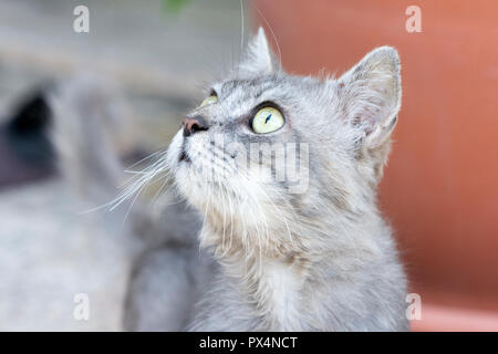 Closeup to gray cat with green eyes - Stock Photo
