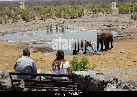 Touristen beobachten Elefanten am Elefanten am Halali Wasserloch, Etosha Nationalpark, Namibia, Afrika - Stock Photo