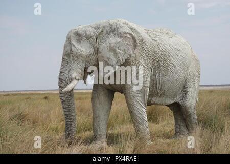 weißer Elefant, mit weißem Schlamm bedeckt, Etosha Nationalpark,  Namibia, Afrika - Stock Photo