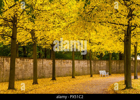 Lovely scene of a white bench in front of a wall between trees wearing their autumn foliage and a road covered with yellow leaves on a sunny golden... - Stock Photo