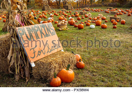 Pumpkins for sale a sign of autumn in Rouge National Urban Park in Toronto Ontario Canada. - Stock Photo