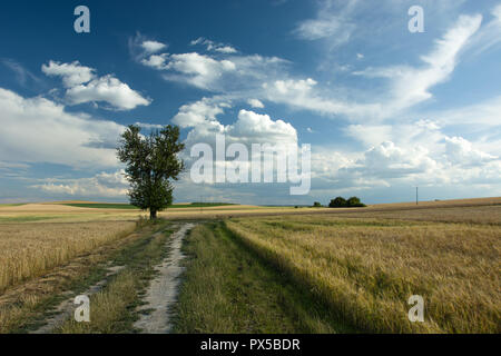 Tree next to a sandy road through fields and clouds in the sky - Stock Photo