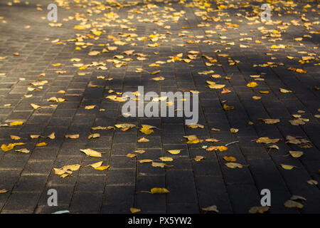bright yellow fallen autumn leaves on asphalt ground background - Stock Photo