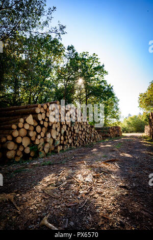 Cut Logs piled in stack/wall. Logging industry/Decoration. - Stock Photo
