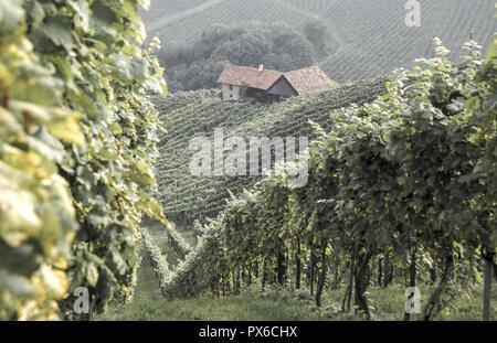Wine route Südsteirische Weinstrasse, Austria, Styria, Southern Styria, Suedsteirische Weinstrasse - Stock Photo