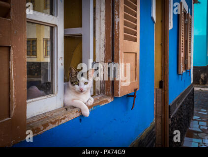 Three color cat lying in the windows of blue house in the streets of African village of Palmeira, island of Sal, Cabo Verde - Stock Photo