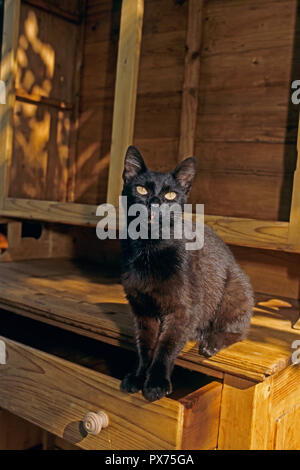 Black cat,gatto nero,chat noir - Stock Photo