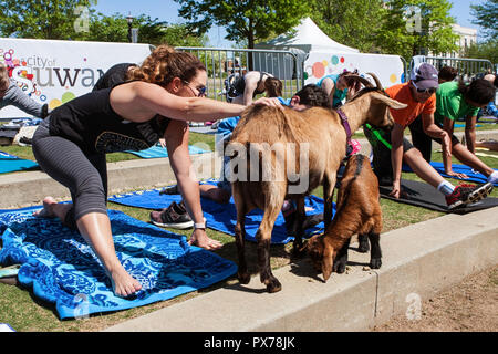 Suwanee, GA, USA - April 29, 2018:  A woman pets a goat while stretching at a goat yoga class in a public park on April 29, 2018 in Suwanee, GA. - Stock Photo
