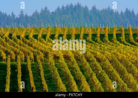 Picturesque vineyards in autumn colors around Ballrechten-Dottingen Germany. - Stock Photo