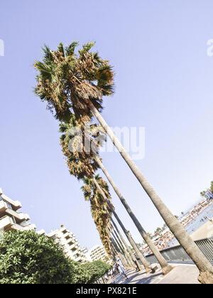 Palms on beach, Playa Malaga, Spain, Andalusia - Stock Photo