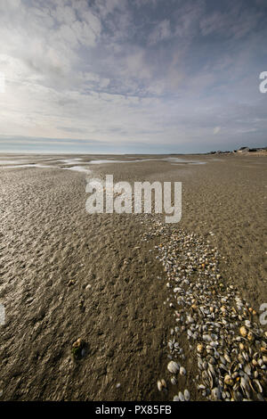 Line of seashells into the beach, Somme Bay, Picardy, France - Stock Photo