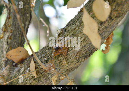 resin flow on tree in park - Stock Photo