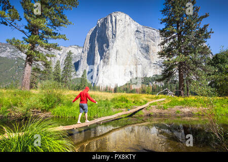 A hiker is balancing on a fallen tree over a tributary of Merced river in front of famous El Capitan rock climbing summit in scenic Yosemite Valley - Stock Photo
