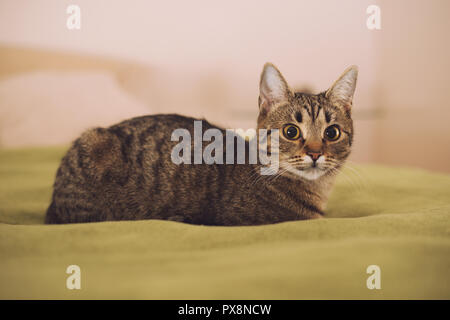 Beautiful cat lying on the bed - Stock Photo