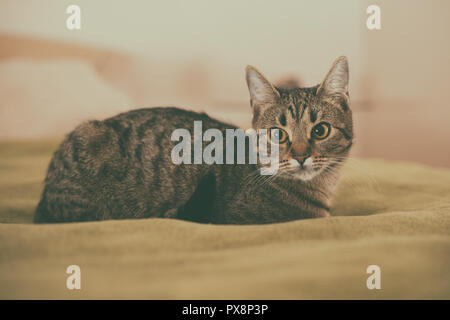 Photo of beautiful young cat lying on the bed. - Stock Photo