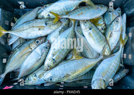 Fresh fish after fishing are traded in fish markets. This fish species live in the waters of the central and south east of Vietnam Red snapper - Stock Photo