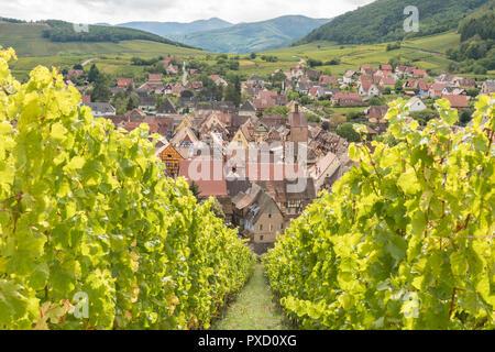Riquewihr, Alsace, France, from Schoenenbourg grand cru vineyard - Stock Photo