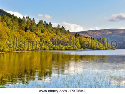 Trees shining bright in the Autumn sunshine, reflecting in the water of Lake Vyrnwy, Powys, Wales, UK. - Stock Photo