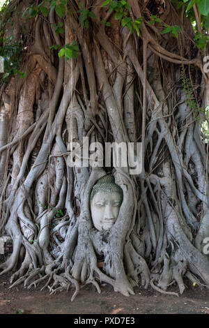Head of Buddha in tree roots. Wat Mahathat Temple. Ayutthaya. Thailand - Stock Photo