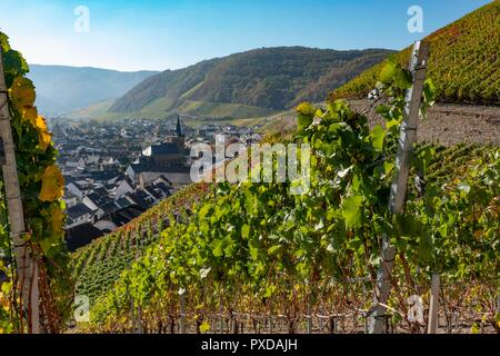 Ahr Valley, Germany. The village of Dernau, a center of wine production is surrounded  by steep slopes covered with vineyards - Stock Photo