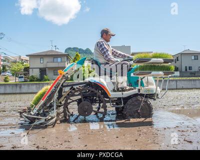 Farmer operating rice planter machine, with trays of rice seedlings, flooded rice fields, next to houses, Takamatsu, Kagawa, Japan - Stock Photo