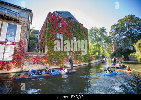 Tourists punting on the River Cam in Cambridge by a wall of Boston Ivy on a sunny autumn day. - Stock Photo