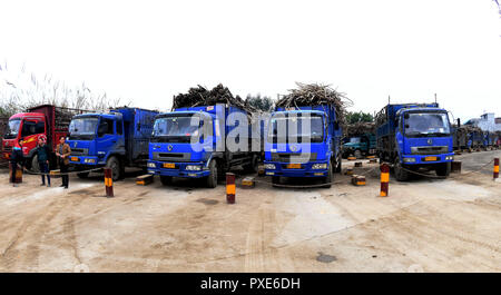 (181022) -- BEIJING, Oct. 22, 2018 (Xinhua) -- Trucks wait to unload sugarcane outside a sugar mill at Hemu Township of the Miao Autonomous County of Rongshui, south China's Guangxi Zhuang Autonomous Region, Jan. 24, 2018. China's road freight transport continued fast expansion in the first nine months of 2018, the Ministry of Transport said in a statement Oct. 20, 2018. From January to September, the amount of cargo carried on roads, which takes up the lion's share in China's total cargo transport, increased 7.5 percent year on year to 28.64 billion tonnes. The growth came amid China's steady - Stock Photo